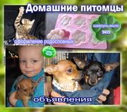 Домашние питомцы -  товары и услуги для владельцев собак и кошек