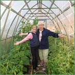 В теплицах можно выращивать перец на отдельных грядках или высадить ег