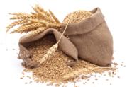 Зерно (ищем покупателей Могилёвская обл) - Пшеница,  Ячмень,  Тритикале!