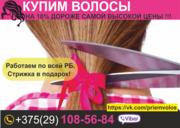 Продать волосы в Могилеве и области. Купим волосы.