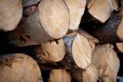 Куплю пиловочник хвойных, лиственных пород