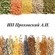 Закупаем зерно фуражное от 20-тонн